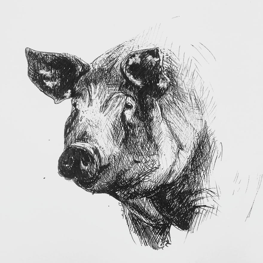 the pig-2